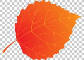 桃花,树,桃子,植物,花,橙色,叶,花瓣,图片