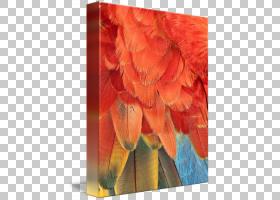 桃花,桃子,羽毛,花瓣,花,橙色,现代建筑,现代艺术,图片