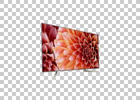 桃花,矩形,桃子,花瓣,花,橙色,电视机,液晶显示器,Sony Bravia X9图片