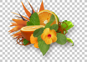 花卉剪贴画背景,植物,橙色,木瓜,切花,装饰,番石榴,杨桃,花,安娜图片