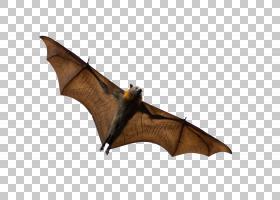 蝙蝠卡通,远程武器,飞来的狐狸,东半球果蝠,大鼠耳蝠,巨型金色飞