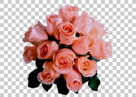 粉红色花卡通,人造花,海棠,蔷薇,花卉设计,插花,花卉,花瓣,植物,图片