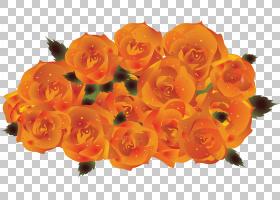 花卉剪贴画背景,水果,玫瑰,玫瑰家族,花瓶,花束,切花,玫瑰臀部,花