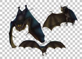 彩色背景,蝙蝠,绘图,小蝙蝠,