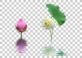 花卉剪贴画背景,芽,一年生植物,植物茎,切花,莲花,草本植物,静物