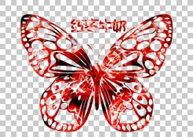 蝴蝶黑白,黑白相间,机翼,线路,刷脚蝴蝶,飞蛾和蝴蝶,昆虫,传粉者,