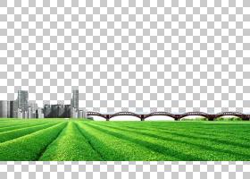 绿草背景,结构,农业,草,牧场,草原,地块,人造草坪,字段,植物,裁剪