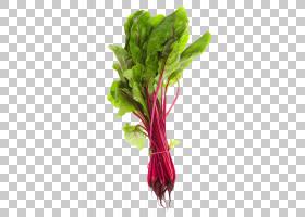 花卉剪贴画背景,叶菜,沙拉,洋红色,蔬菜,切花,甜菜,春日绿意盎然,