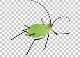 蟑螂卡通,线路,绿色,甲虫,害虫,飞起来,Microsoft Word,软件,象虫