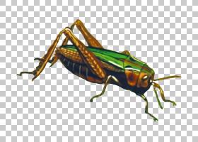 蚂蚁卡通,甲虫,圣甲虫,蟋蟀般的昆虫,害虫,昆虫,象虫,板球,绿色黄
