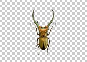金属背景,喇叭,鹿角,金属,金龟子,卢卡努斯,昆虫,上传,绿色,大众