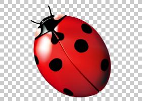 红色背景,红色,昆虫,计算机网络,瓢虫,数字容器格式,RMVB,瓢虫属,图片