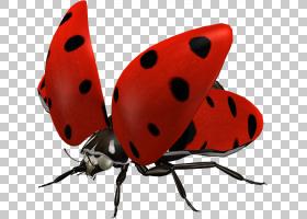蝴蝶剪贴画,甲虫,蝴蝶,红色,网络,昆虫,瓢虫,图片