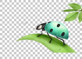 背景绿色,瓢虫,甲虫,绿色,昆虫,技术,广告,绘图,漫画,动画,海报,