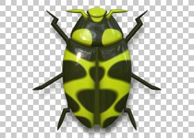 背景绿色,黄色,传粉者,昆虫,动物,瓢虫,甲虫,