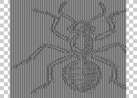 蝴蝶黑白,图表,面积,线条艺术,害虫,线路,黑白相间,昆虫,外骨骼,