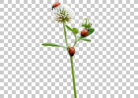 花卉剪贴画背景,种,切花,植物茎,瓢虫,蝴蝶和蛾子,昆虫,花蜜,传粉