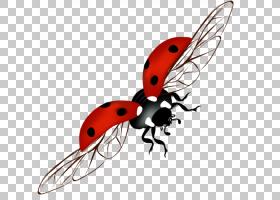 瓢虫,象虫,飞,机翼,甲虫,害虫,瓢虫,昆虫,TIFF,瓢虫,
