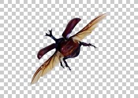 蟑螂卡通,大黄蜂,甲虫,圣甲虫,害虫,传粉者,飞起来,模板,免费赠送