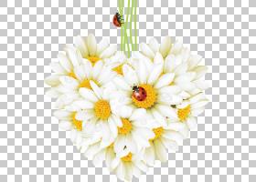花卉剪贴画背景,花卉产业,花束,牛眼雏菊,插花,雏菊,花卉设计,雏