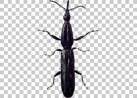 蟑螂卡通,天牛,甲虫,圣甲虫,害虫,象虫,飞,蟑螂,昆虫,