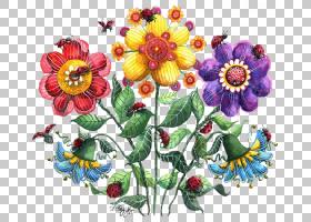 花卉剪贴画背景,雏菊家庭,花瓣,紫罗兰族,插花,花卉产业,雏菊,植