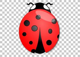 笔记本电脑背景,红色,圆,甲虫,昆虫,瓢虫属,瓢虫,材料,贴花,瓢虫,