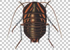 蟑螂卡通,害虫,蝶形目(Blattodea),双翅目昆虫,昆虫,相位体,钩端