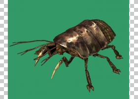 粉尘4犀牛甲虫,日本犀牛甲虫,甲虫,圣甲虫,害虫,昆虫,象虫,犀牛甲
