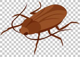 蟑螂卡通,寄生虫,圣甲虫,害虫,甲虫,美洲蟑螂,昆虫,蟑螂,