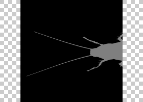 蟑螂卡通,暗色甲虫,瓢虫,错误,地甲虫,甲虫,蝶形目(Blattodea),褐