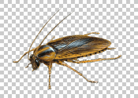 蟑螂卡通,气垫蝇,甲虫,鸣蝇,网翅昆虫,黑蝇,膜翅昆虫,苍蝇,绦科(T