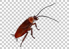 蟑螂卡通,瓢虫,东方蟑螂,甲虫,害虫,巴黎区,巴黎,卧室,家具,昆虫,