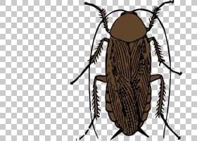 蟑螂卡通,甲虫,传粉者,飞,文档,动画片,害虫,美洲蟑螂,德国蟑螂,