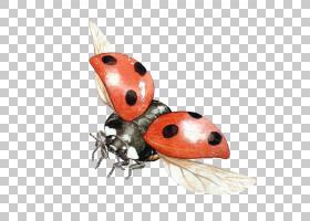 3D背景,害虫,桔黄色的,瓢虫,昆虫,3D计算机图形学,剪裁路径,瓢虫,
