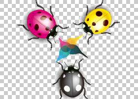 彩色背景,甲虫,昆虫,颜色,CDR,上传,动物,七星瓢虫,动画片,瓢虫,