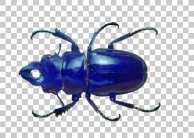 彩色背景,圣甲虫,害虫,昆虫,颜色,圣甲虫,蓝色,黑甲虫,大众甲壳虫