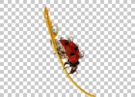 彩色背景,昆虫,白色,海报,颜色,红外线,蓝色,七星瓢虫,红色,瓢虫,
