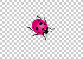 彩色背景,昆虫,颜色,小丑瓢虫,七星瓢虫,瓢虫,甲虫,