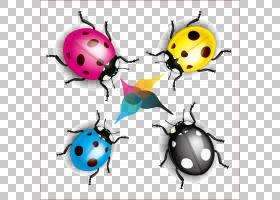 彩色背景,甲虫,昆虫,动物,颜色,光栅图形,海报,动画片,瓢虫,七星