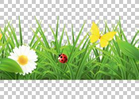 春节花卉背景,草坪,草甸,野花,鲜花,昆虫,甲虫,草族,植物,绿色,草