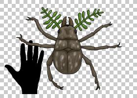 树木图画,害虫,树,未来是狂野的,昆虫,金龟子,进化,生物学,未来,