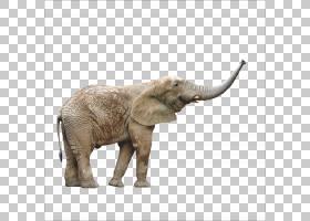 卡通自然背景,非洲象,印度象,大象,鼻部,野生动物,里斯・琼斯,目图片
