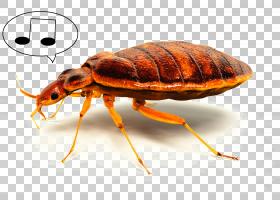 沙发卡通,象虫,甲虫,蟑螂,动物,沙发,床单,寄生,家具,白蚁,床,真图片