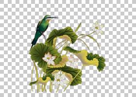 春节花卉背景,蜂鸟,鸟,小枝,插花,喙,分支机构,花,珊瑚形目,花卉