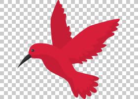 万维网,红色,机翼,羽毛,喙,传粉者,水鸟,网络搜索引擎,谷歌搜索,图片