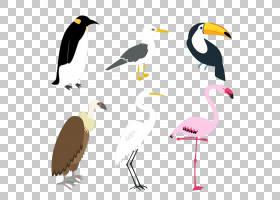 平面卡通,海鸟,喙,水鸟,飞机,白鹭,中间白鹭,动画片,大白鹭,小白图片