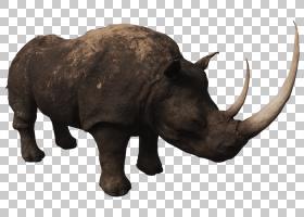印度象,食物,物种,吃东西,大象,野生动物,印度犀牛,黑犀牛,动物,图片