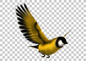飞机轮廓,羽毛,雀类,鸣鸟,喙,颜色,红色,剪纸,剪影,蓝色,绿色,飞图片