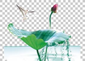 海报模板,水,花瓣,花,种,组织文化,商业,标语,文化,模板,宣传,广图片